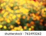 marigold yellow or orange color ... | Shutterstock . vector #761493262