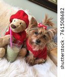 Small photo of A Sweet, Spoiled, Senior Yorkshire Terrier wearing a handmade red wool sweater and a match red top knot bow sitting next to her toy plush teddy bear and drinking a green juice smoothie