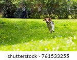 Stock photo running dog in summer garden 761533255