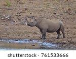The Endangered Black Rhinocero...