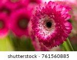 bunch of beautiful gerberas in... | Shutterstock . vector #761560885