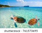mahahual caribbean beach turtle ... | Shutterstock . vector #761573695