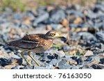 squacco heron  in the danube... | Shutterstock . vector #76163050
