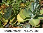 Plakkie Plants In A Garden
