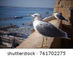 The Seagull Screams On The Edge ...