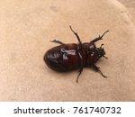 coconut rhinoceros beetle ... | Shutterstock . vector #761740732