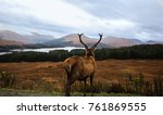 the red deer stag of glencoe ... | Shutterstock . vector #761869555
