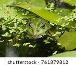 protected green frog head in... | Shutterstock . vector #761879812