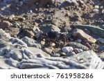 crab near to the beach | Shutterstock . vector #761958286