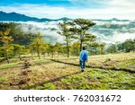 traveling the pine hill at the...   Shutterstock . vector #762031672