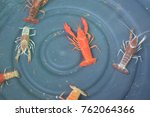 Small photo of Crayfish Cambarellus Orange