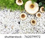 modern garden design | Shutterstock . vector #762079972