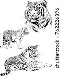 vector drawings sketches... | Shutterstock .eps vector #762226396