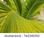 green leaves background  walls... | Shutterstock . vector #762240352