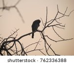 a bird wakes up for a new... | Shutterstock . vector #762336388