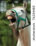Image Of A White Horse Yawning...