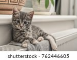 Stock photo cute little grey kitten with blue eyes relaxing on the warm radiator closeup 762446605