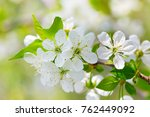 blossoming cherry against the... | Shutterstock . vector #762449092