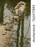 aquatic turtles family  | Shutterstock . vector #762477895