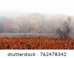 foliage in the morning mist | Shutterstock . vector #762478342
