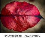 Fall Leaves. Abstract Seasons...