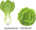 head of green cabbage and ... | Shutterstock .eps vector #76250131