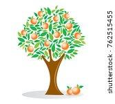 orange tree  fruit tree  ... | Shutterstock .eps vector #762515455