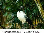black necked crane | Shutterstock . vector #762545422