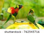Rainbow Lorikeet Bird Taking A...