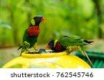 rainbow lorikeet bird taking a... | Shutterstock . vector #762545746