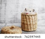 A Cute Fluffy Hamster Looks Ou...