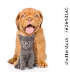 Stock photo bordeaux dogue puppy and scottish kitten sitting together isolated on white background 762643165