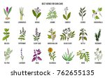 collection of best herbs for... | Shutterstock .eps vector #762655135