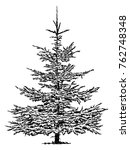 vector   spruce tree isolated... | Shutterstock .eps vector #762748348