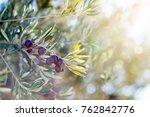 spanish olive grove  branch... | Shutterstock . vector #762842776