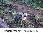 baby hyena in serengeti... | Shutterstock . vector #762863842