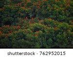 thousands bright red birds... | Shutterstock . vector #762952015