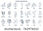 collection of best herbs for... | Shutterstock .eps vector #762976012