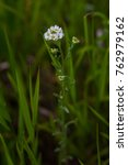 Small photo of Wildflowers, accidentally discovered in the park