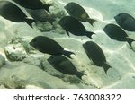 Small photo of A flock of coral fish (Acanthurus nigrofuscus Brown surgeonfish) against the background of a sandy bottom