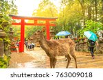 Small photo of Wild deer in Nara Park at sunset light, Japan. Deer are symbol of Nara's greatest tourist attraction. On background, red Torii gate of Kasuga Taisha Shine one of the most popular temples in Nara City.