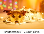 jack russell dog resting and... | Shutterstock . vector #763041346