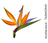bird of paradise tropical...   Shutterstock .eps vector #763042945