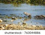 a sandpiper at the shore | Shutterstock . vector #763044886