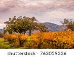 Vineyards In Autumn Looking...