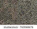 Swarming of whirligig beetles (family Gyrinida) on river water surface, Wyalusing State Park, Wisconsin, USA