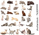 Stock photo collection of a cats in different poses isolated over white background 76309999