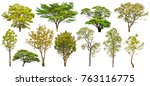 isolated trees on white... | Shutterstock . vector #763116775