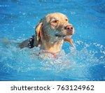 a dog having a fun at a local... | Shutterstock . vector #763124962