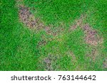 pests and disease cause amount... | Shutterstock . vector #763144642
